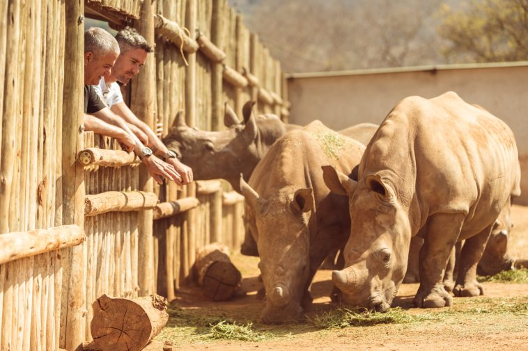 Care For Wild Rhino Sanctuary (2)
