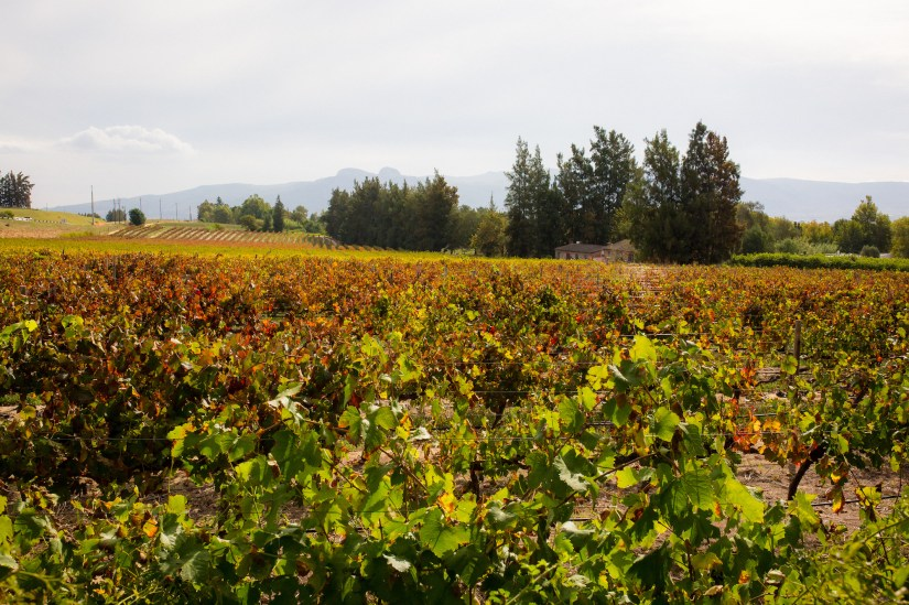 Fall-winery-in-Cape-Town