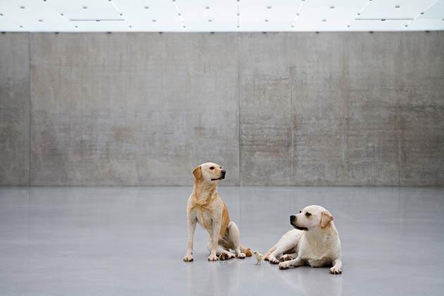 Untitled (Source: Guggenheim Bilbao)