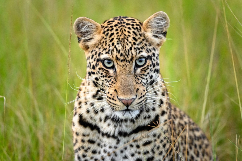 Luxury Safari Camp Magashi Opens In Rwanda's Akagera National Park 10