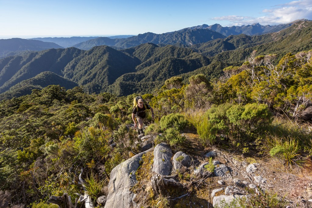 Paparoa Trail New Zealand's Great New Walk Officially Opens 2