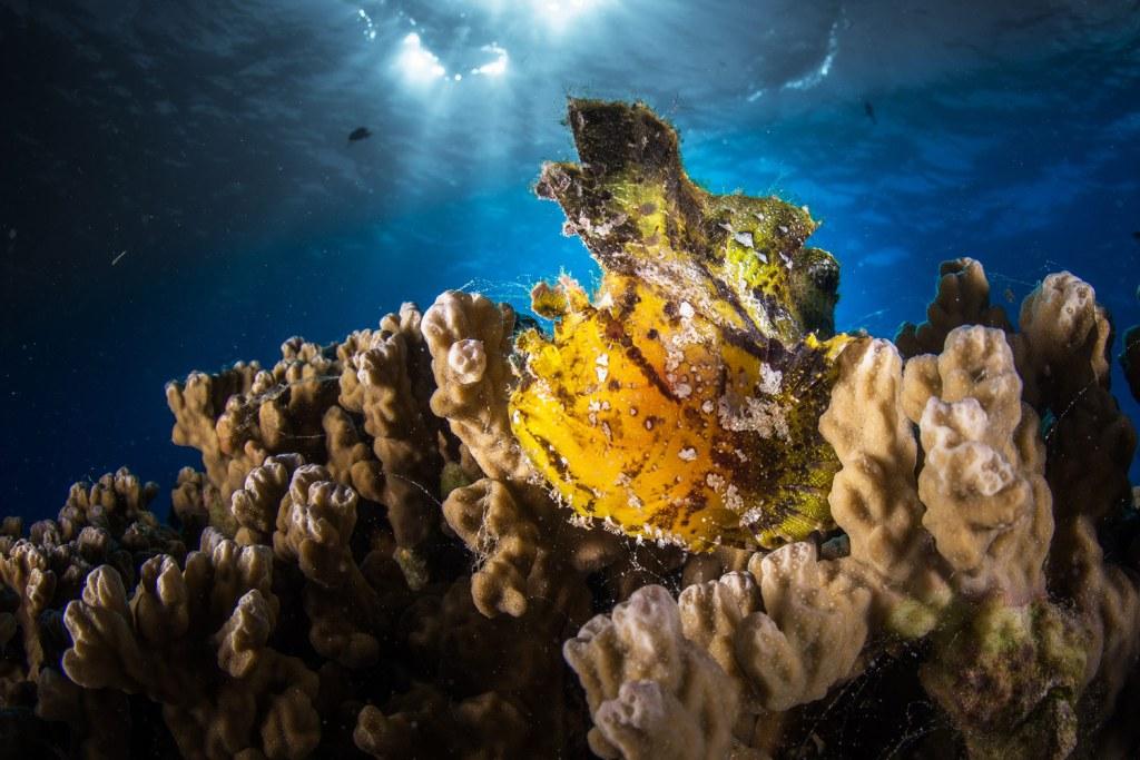 Diving at Tupitipiti, Bora Bora in the Island of Tahiti