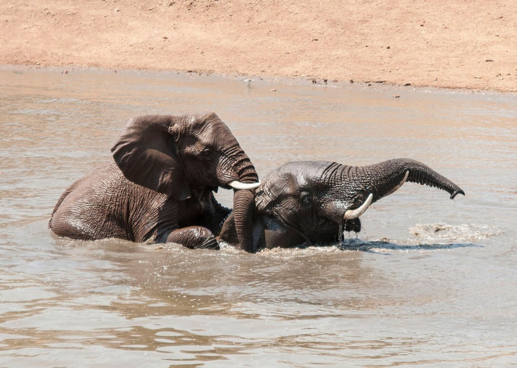 Elephants at Jaci's Lodge in South Africa