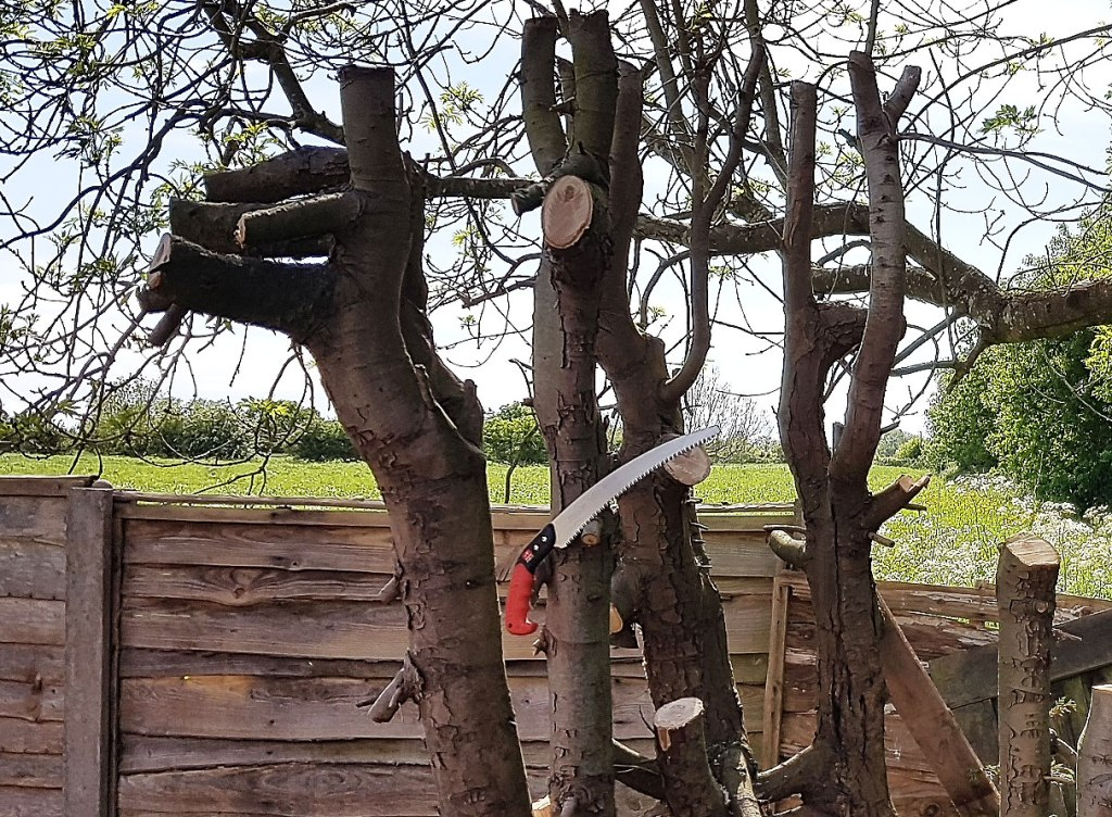 Extreme Lockdown Lopping with the Samurai C-330-LH Pruning Saw