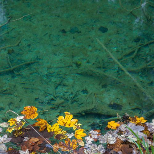 Crystal clear water. Plitvice lakes, Croatia