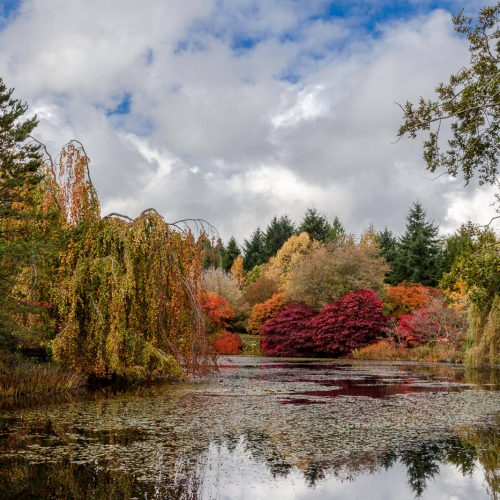 Autumn colours reflected in a lily-pad pond of VanDusen botanical gardens, Vancouver, BC, Canada.