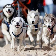 Schlittenhunderennen auf der Insel Usedom