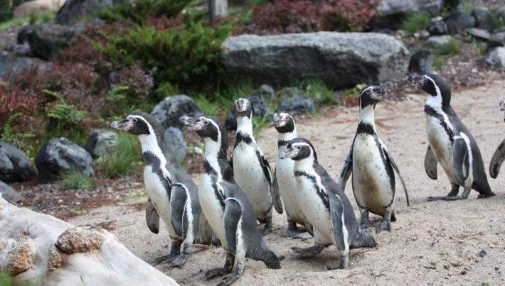 Pinguine im Polarium Zoo Rostock