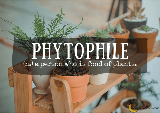 Phytophile