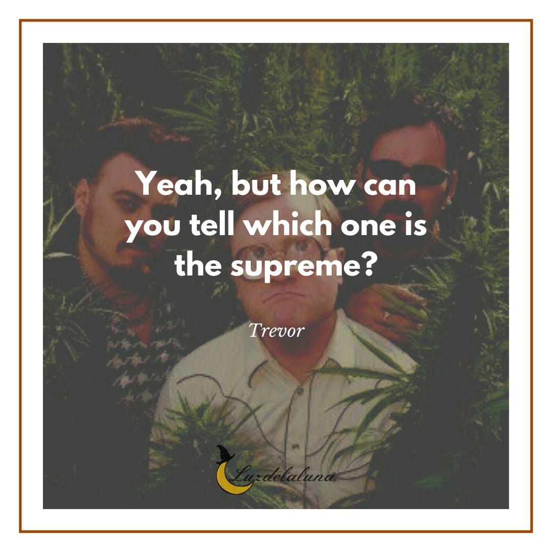 trevor quotes