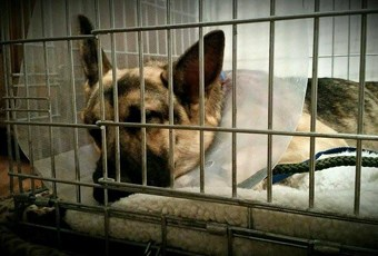 Charlie– Recovered – 04-30-15