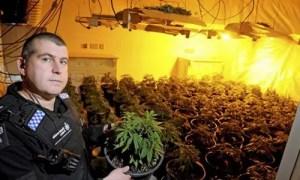 Marijuana Felony in Las Vegas