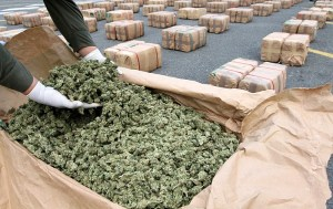 Weed trafficking lawyers