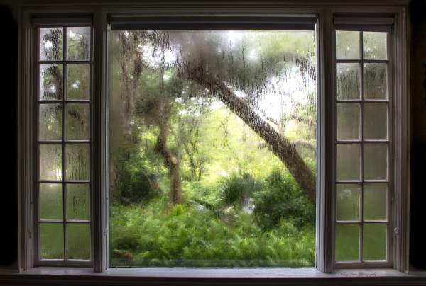 "Selby Gardens-""A Room With A View"" by Nancy Falco"
