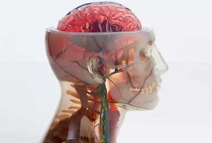 Impressão 3D muilti colorida feita com a nova impressora 3D J750 de uma cabeça e pescoço humano com todos os detalhes de nervos, músculos, veias, etc
