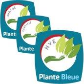 plante-bleue-niveaux