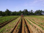 Champs de pommes de terre