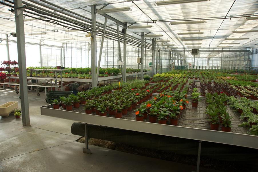 Plantes en pots