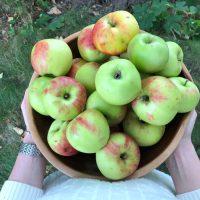 Äppelmos - som du enklast (och godast) gör i ugn