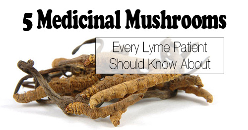 5 Medicinal Mushrooms Every Lyme Patient Should Know About