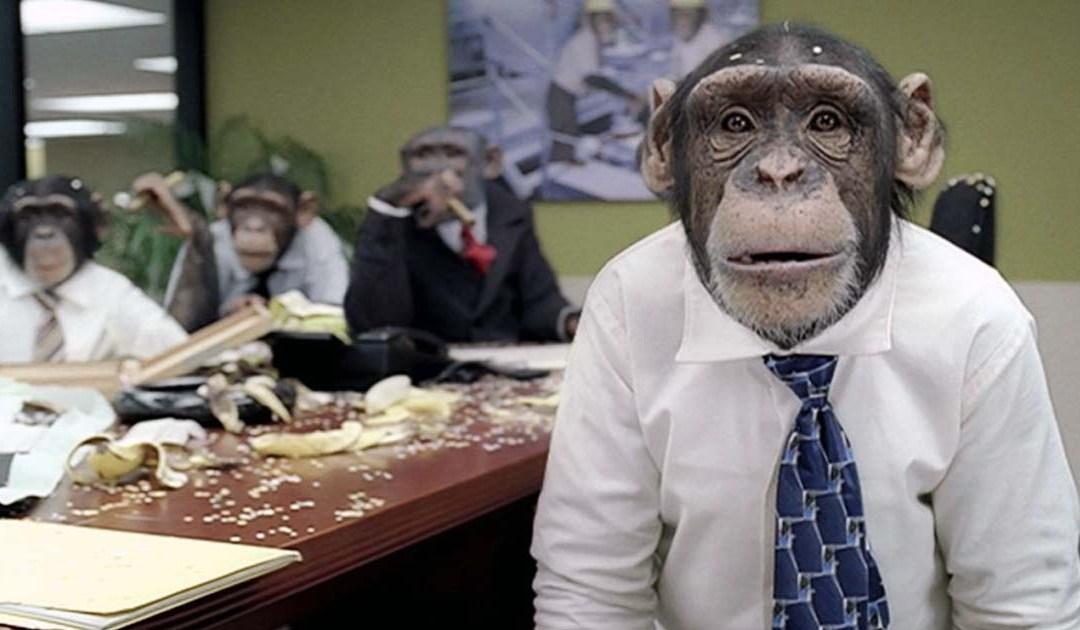 Checking In: God Damn Monkeys