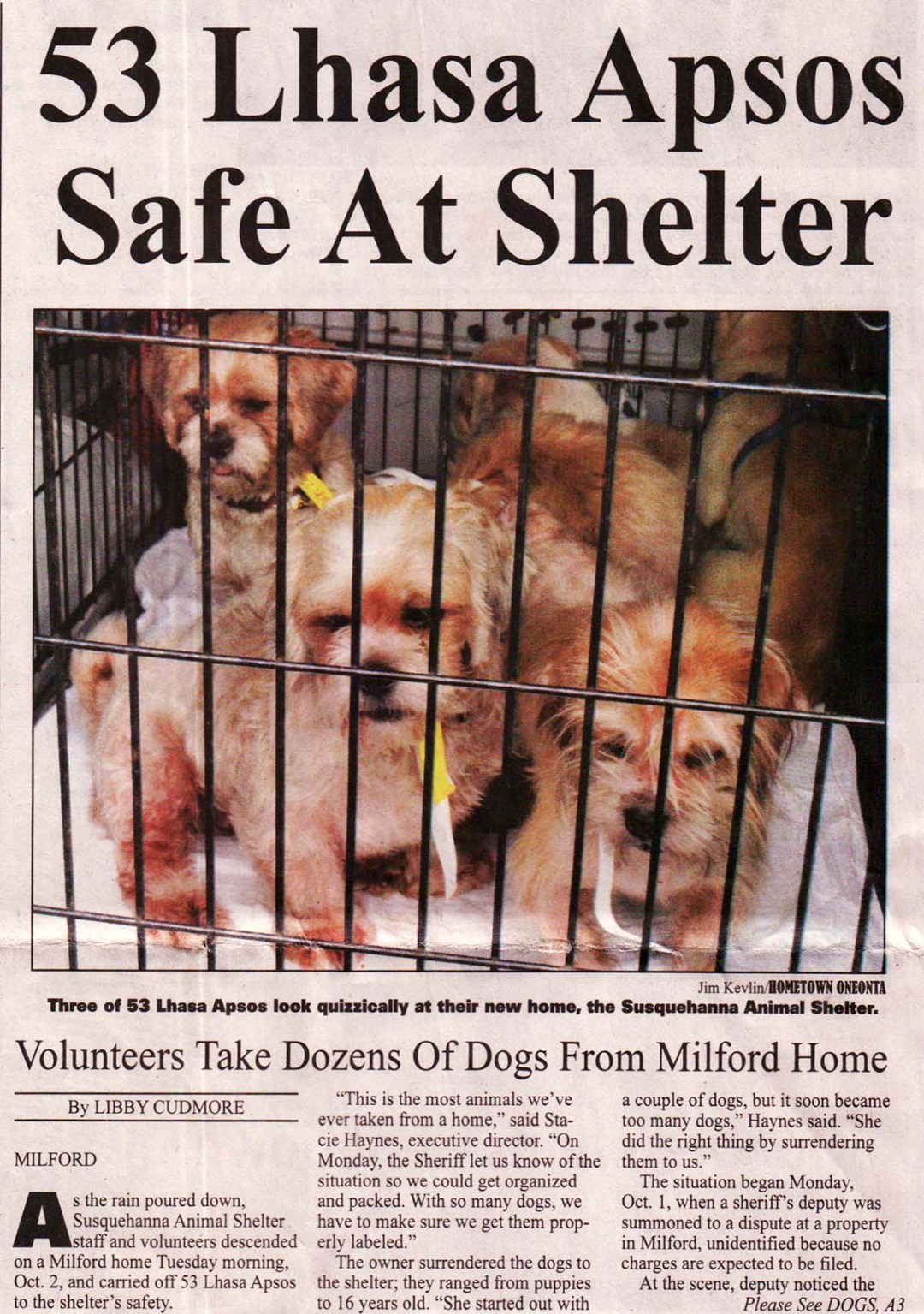 53 Lhasa Apso dogs rescued from home in Milford NY