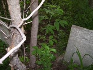 sanford-loverin-cemetery-photo-2011-2