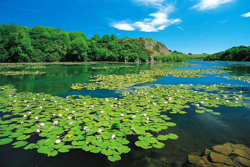 May-Bosherston-Lily-Ponds.jpg