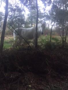 Unicorn in spain