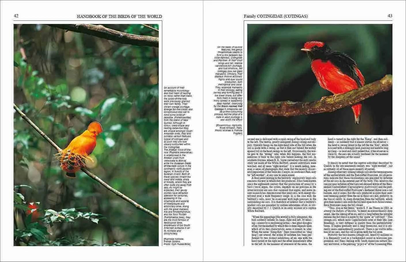 Handbook of the Birds of the World - Volume 9