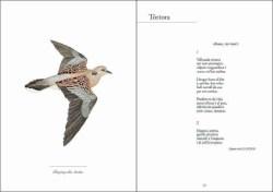 Veus d'ocells/Bells ocells sample page