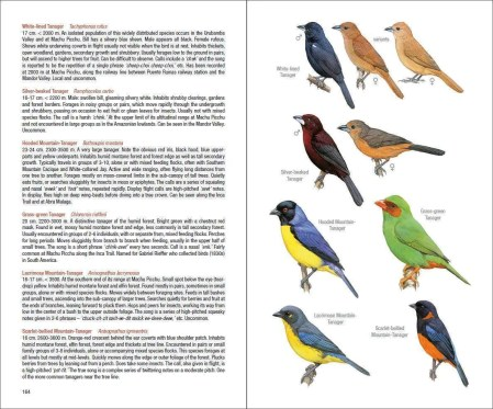 Field Guide to the Birds of Machu Picchu and the Cusco Region, Peru sample page