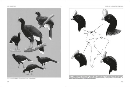 Curassows and Related Birds sample page