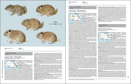 Handbook of the Mammals of the World - Volume 6 sample page