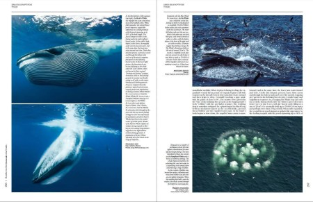 Handbook of the Mammals of the World - Volume 4 sample page