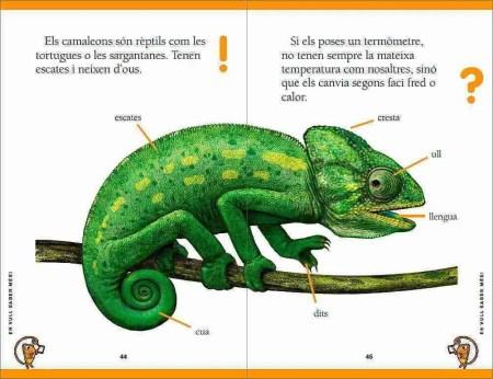 El camaleó enfadat sample page