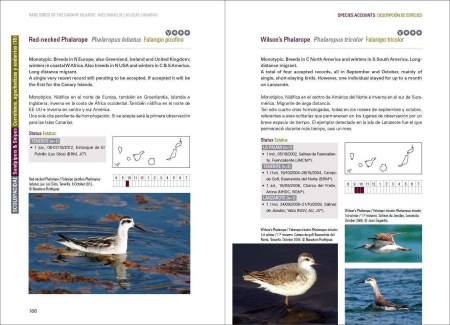 Rare Birds of the Canary Islands / Aves raras de las Islas Canarias sample page