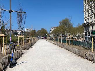 Les platanes du quai Sarrail remplacés - Lyon Demain