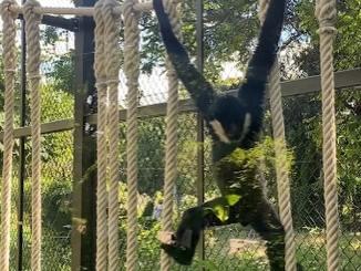 bien-être animal au zoo de Lyon