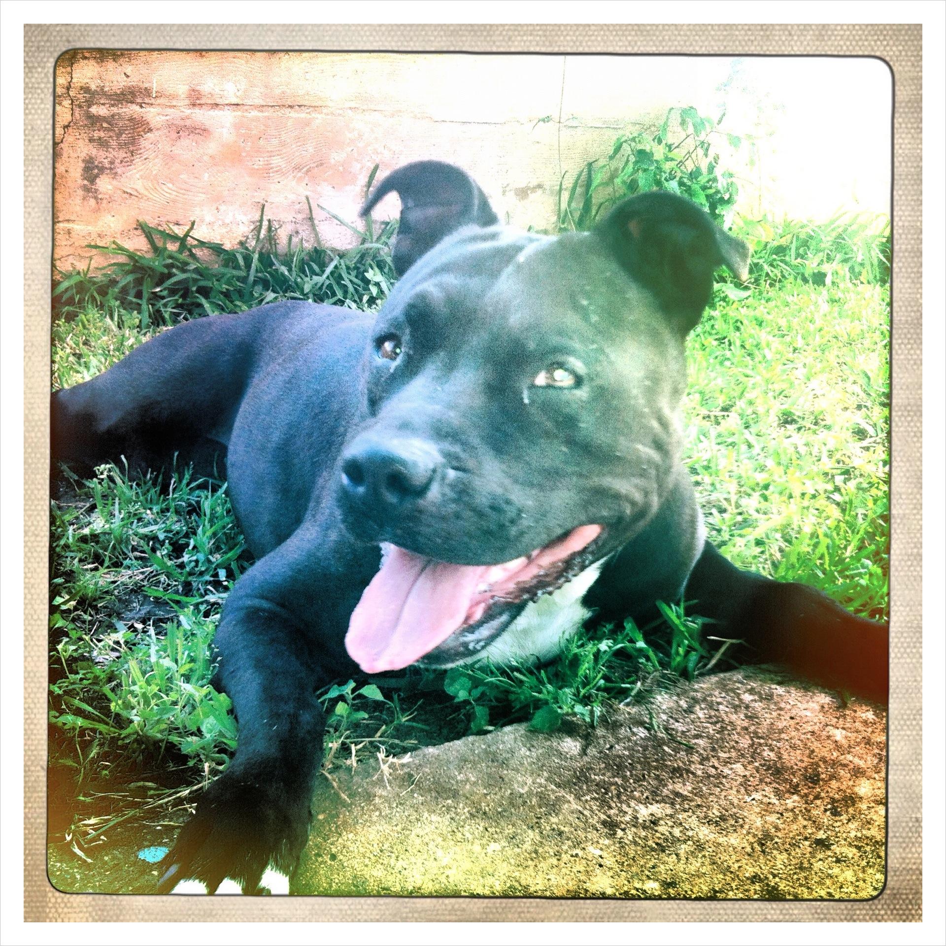 My Grand dog Veda
