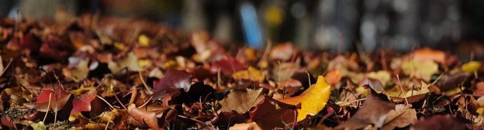 leaves-101329_960_720