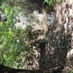 Ich beim kleinen Wasserfall zwischen den Bäumen