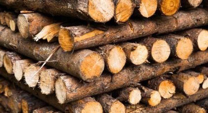 quel bois utiliser dans une cheminee