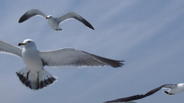 まちのなか大学「町に来る冬鳥たち」