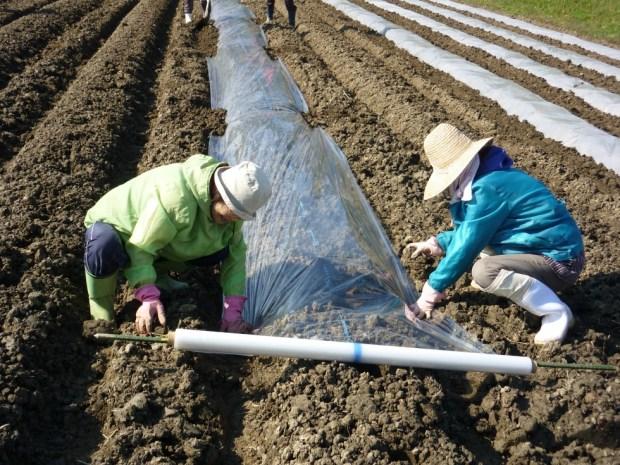11月6日(木)「そら豆」の種まき体験 開催のお知らせ
