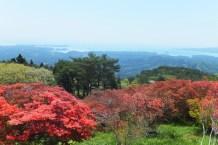 ツツジが開花している頃の田束山