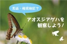 荒砥・権現地区でアオスジアゲハを観察しよう!