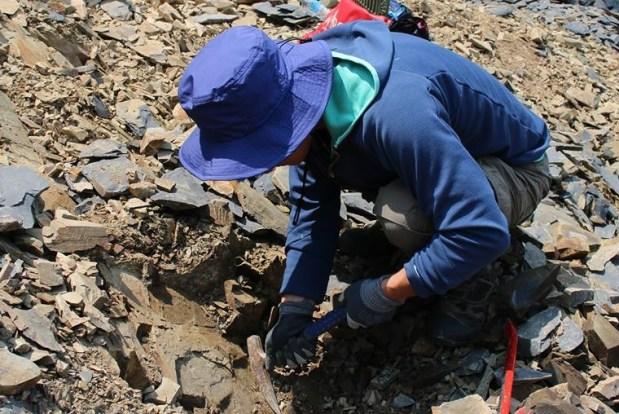 【GW限定開催】「2021年南三陸で化石発掘体験!」開催のお知らせ