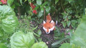 ArduFox V1 hiding from the hunters