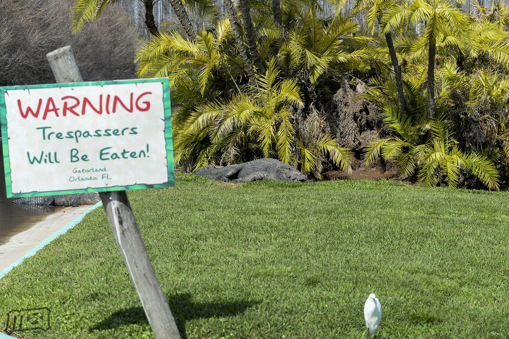 Warning Big Gator